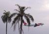 Airbus 320-232 (PR-MAE), da TAM, logo após a decolagem. (De Miami?)