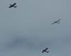 Aero Boero do CVV da AFA voando ao lado do Ipanema do CVV da AFA durante um reboque de planador.