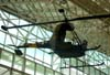 Hiller YH-32 (Model HJ-1 Hornet). (11/06/2008) Foto: Santiago Oliver.