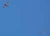 Aero Boero 180, PP-GBM, do Aeroclube de Rio Claro, liberando o planador PZL Bielsko SZD-48-3 Jantar Standard 3, PT-POV, pilotado pelo Comandante Lídio Bertolini Neto.
