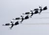 Os Aero Vodochody L-39 Albatros do Heavy Metal Jet Team. (28/07/2011) - Foto: Celia Passerani.